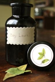 Kitchenette Finds Bay Laurel Leaf